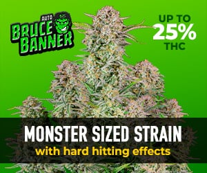 Buy Bruce Banner Auto from Fast Buds